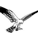 esparver cendrós: il·lustració de l'ampolla d'oli verge extra Lacrima Olea (Godall)